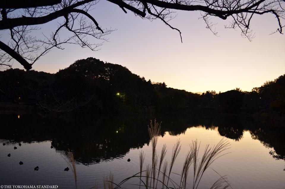 紅葉2015三ツ池公園14-THE YOKOHAMA STANDARD