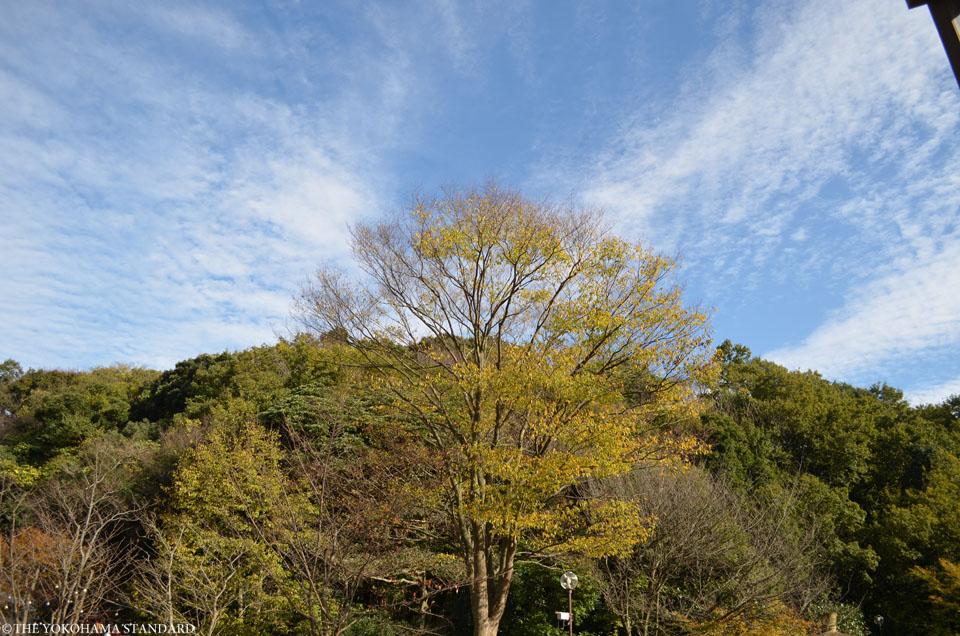 秋の金沢自然公園13-THE YOKOHAMA STANDARDブラフ