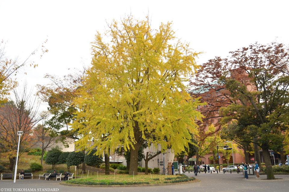 山下公園通りの黄葉4-THE YOKOHAMA STANDARD