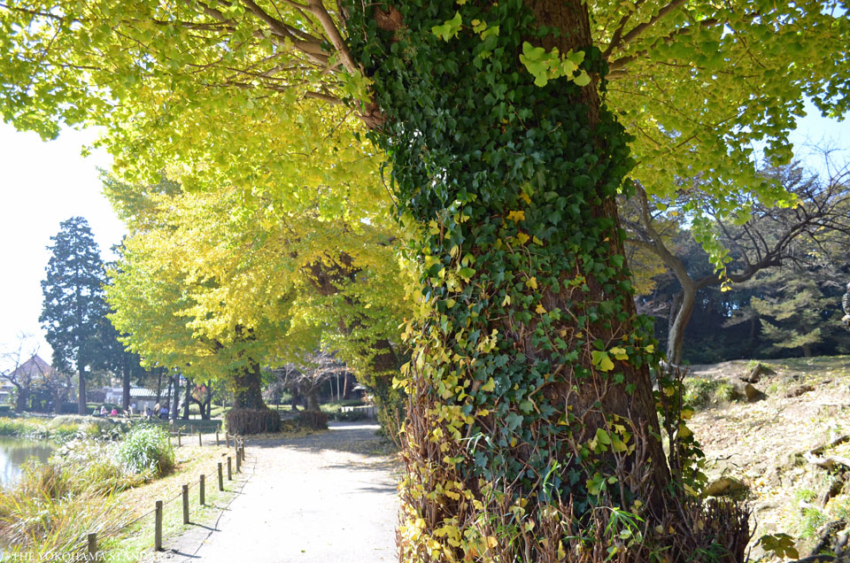 紅葉2015称名寺5-THE YOKOHAMA STANDARD