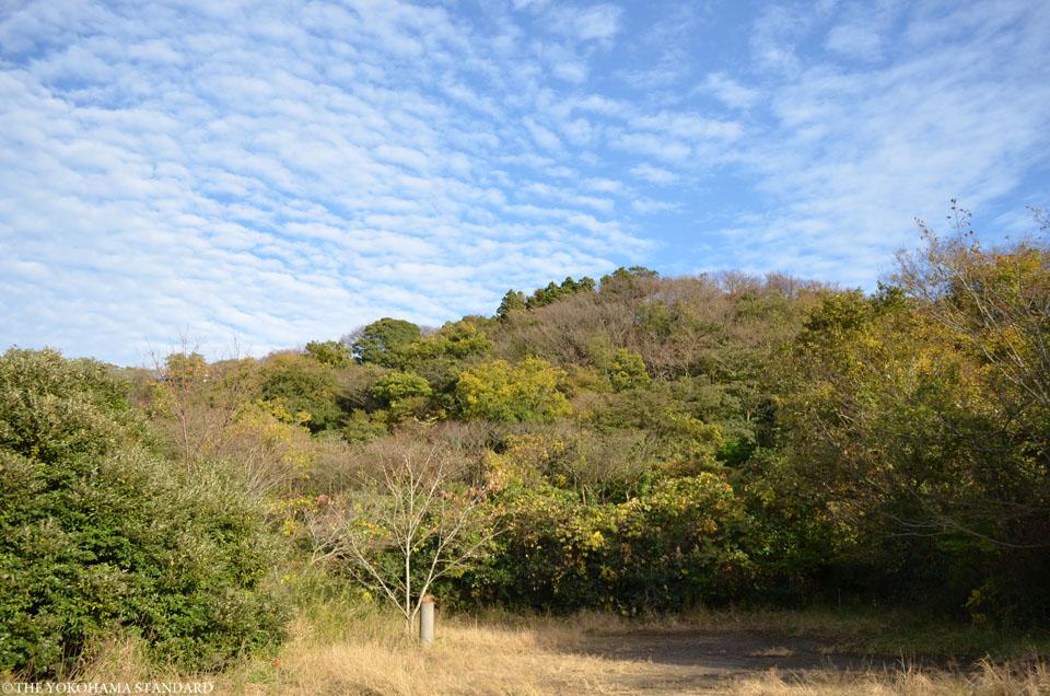 紅葉2015横浜自然観察の森1-THE YOKOHAMA STANDARD