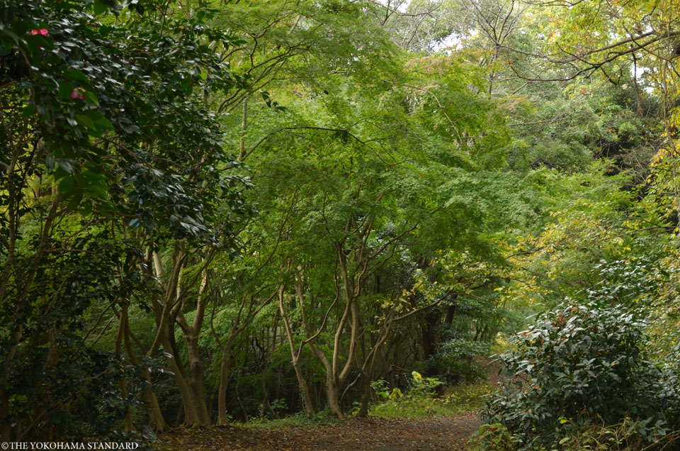 紅葉2015横浜自然観察の森6-THE YOKOHAMA STANDARD