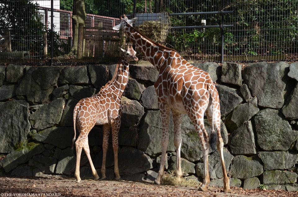秋の金沢自然公園3-THE YOKOHAMA STANDARDブラフ