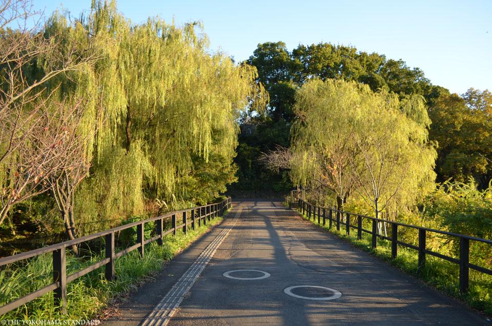 紅葉2015三ツ池公園2-THE YOKOHAMA STANDARD