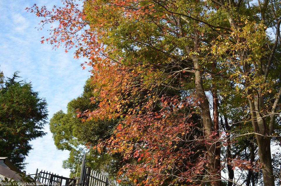 秋の金沢自然公園12-THE YOKOHAMA STANDARDブラフ