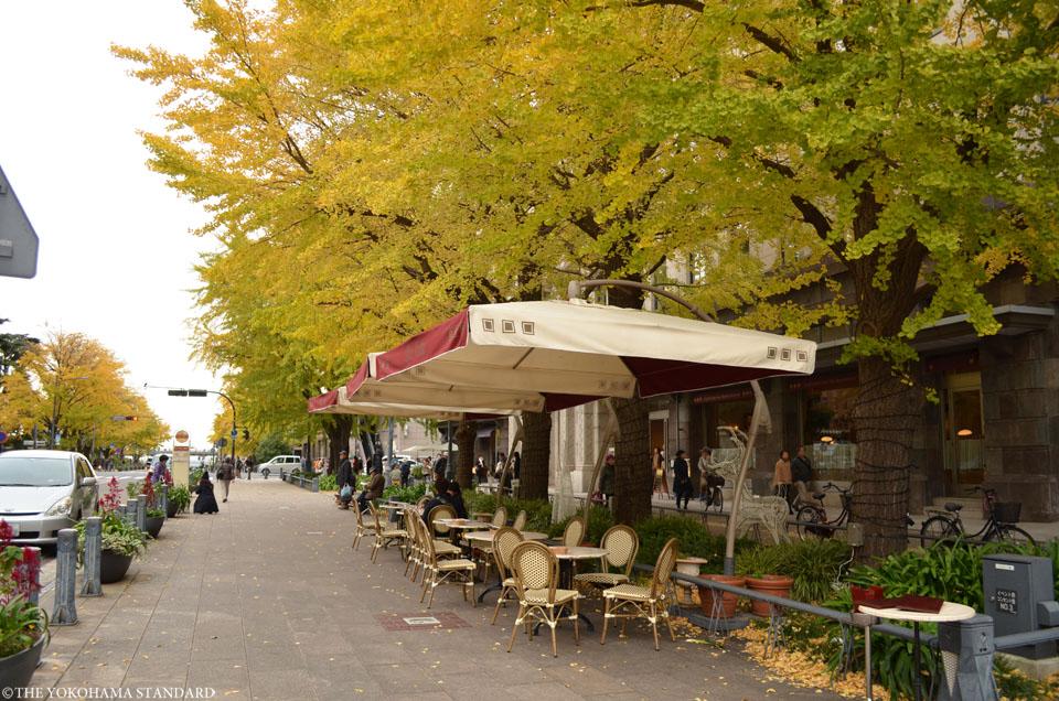 日本大通りの紅葉5-THE YOKOHAMA STANDARD