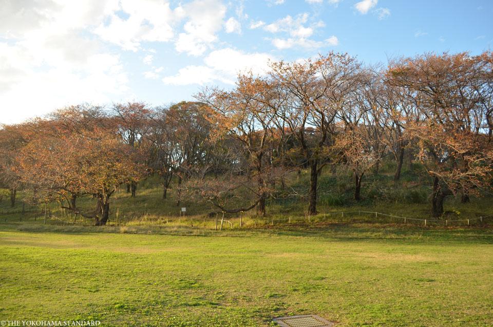 秋の根岸森林公園12-THE YOKOHAMA STANDARD