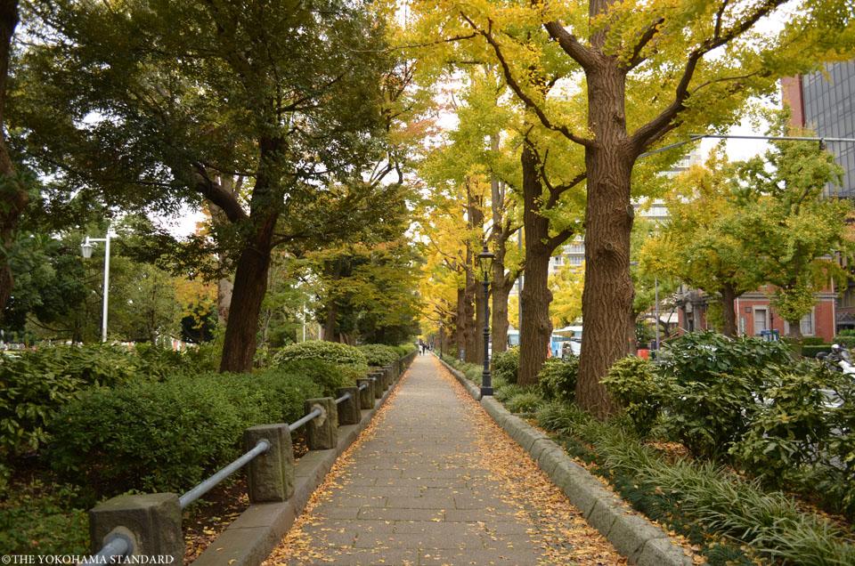 山下公園通りの黄葉2-THE YOKOHAMA STANDARD