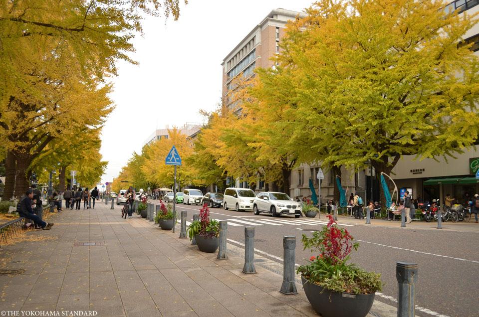 日本大通りの紅葉2-THE YOKOHAMA STANDARD
