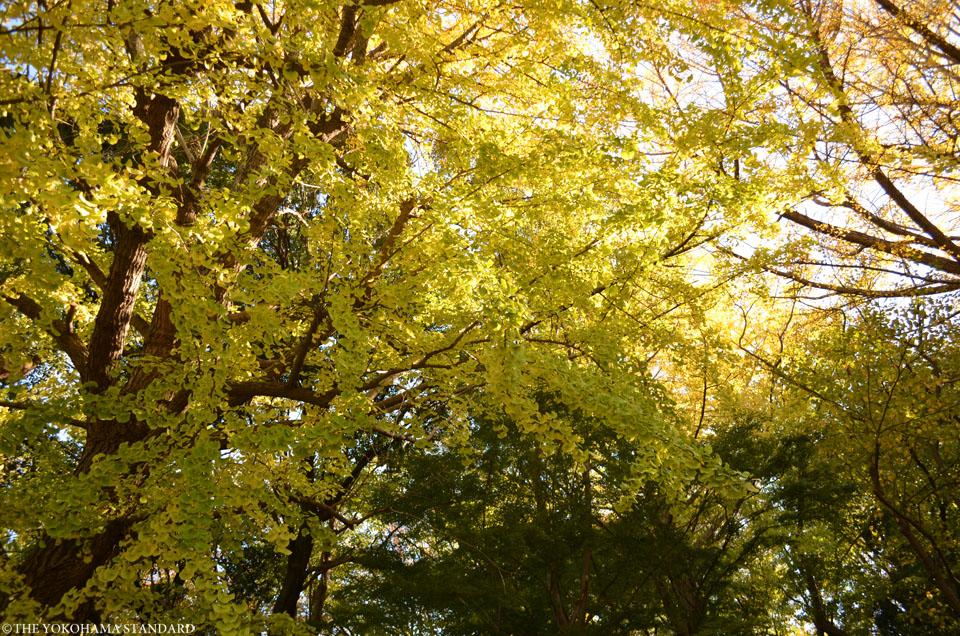 總持寺の紅葉2015年3-THE YOKOHAMA STANDARD