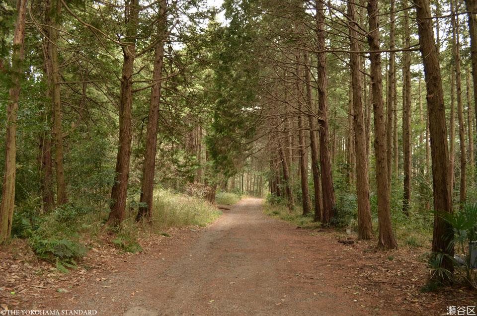 10瀬谷区・瀬谷市民の森-THE YOKOHAMA STANDARD