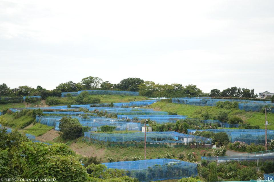 6金沢区・柴農園-THE YOKOHAMA STANDARD