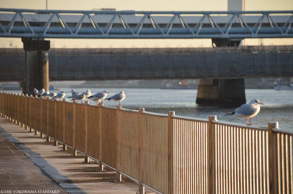 鶴見川の河口6-THE YOKOHAMA STANDARD