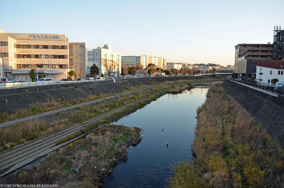 柏尾川のアオサギ3-THE YOKOHAMA STANDARD