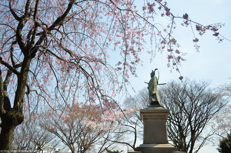2016掃部山公園の桜6-THE YOKOHAMA STANDARD