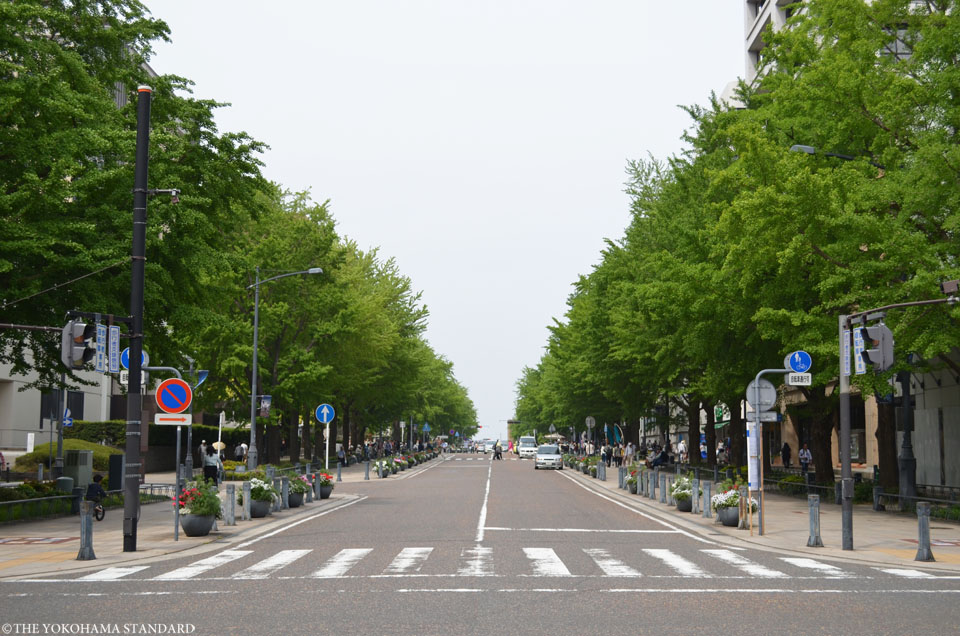 新緑の日本大通り1-THE YOKOHAMA STANDARD
