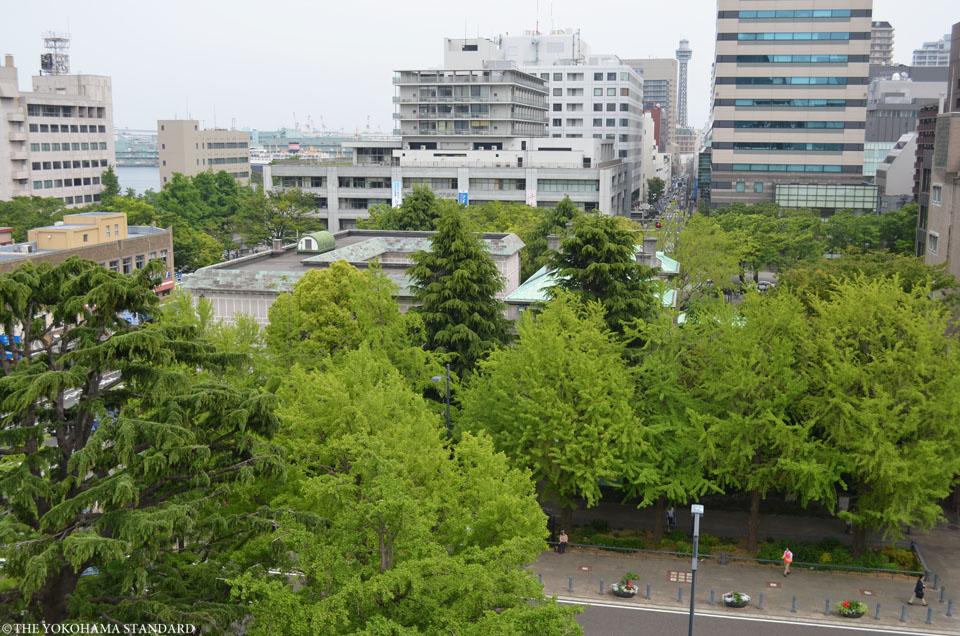 新緑の日本大通り2-THE YOKOHAMA STANDARD