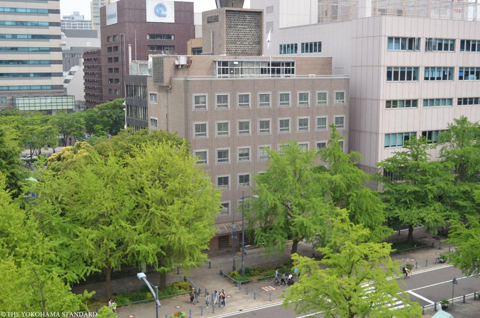 新緑の日本大通り3-THE YOKOHAMA STANDARD