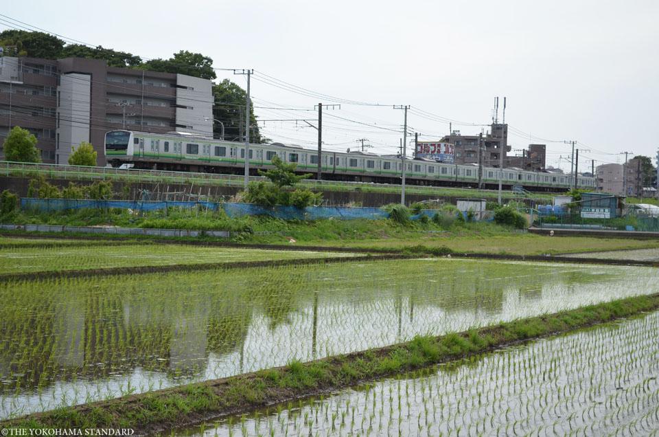 中山田植え2-THE YOKOHAMA STANDARD