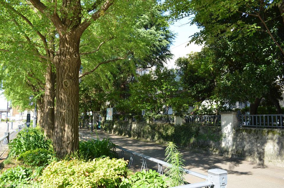 横浜の通り・日本大通り16-THE YOKOHAMA STANDARD