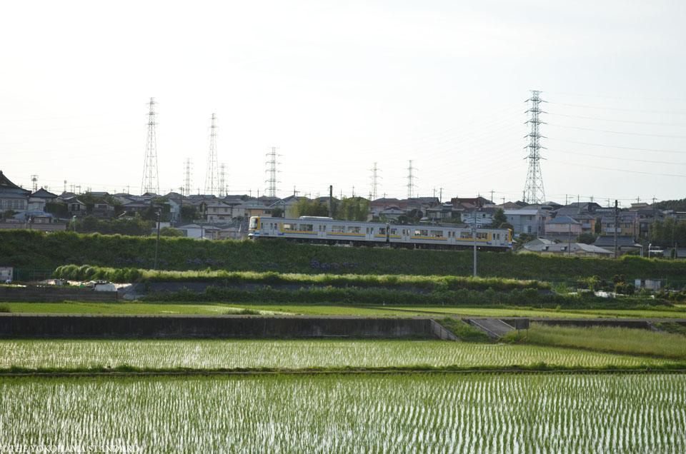 田奈2016田植え2-THE YOKOHAMA STANDARD