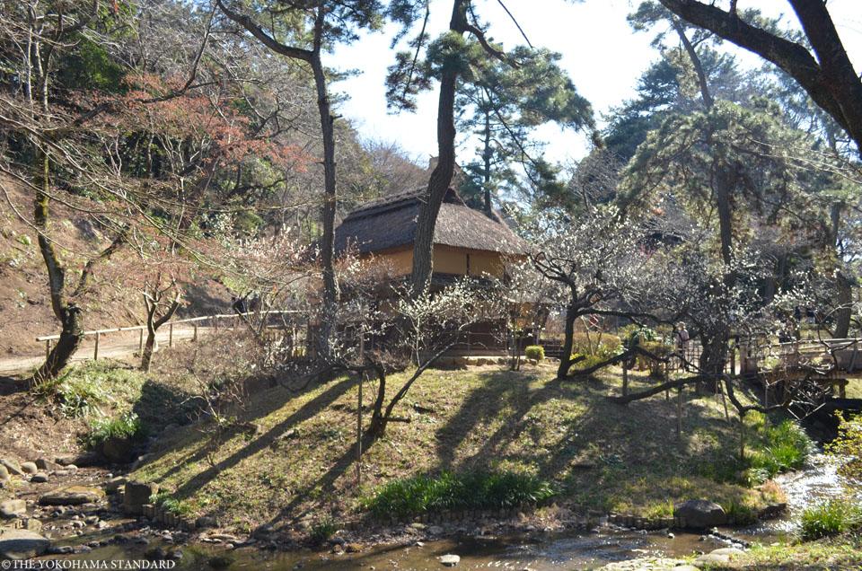 2017三溪園の梅6-THE YOKOHAMA STANDARD