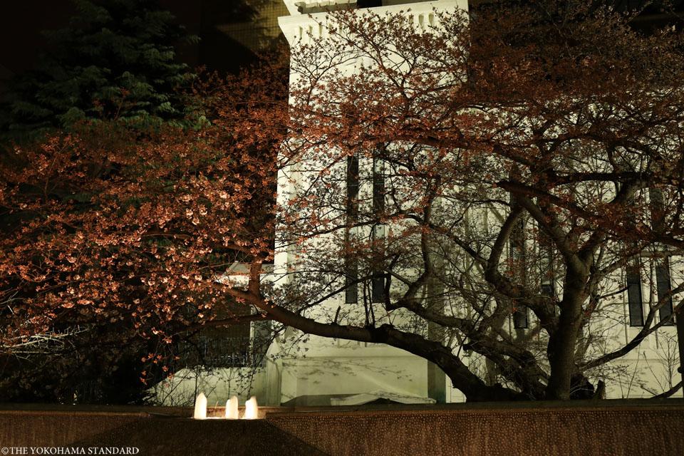 横浜海岸教会の夜桜3-THE YOKOHAMA STANDARD