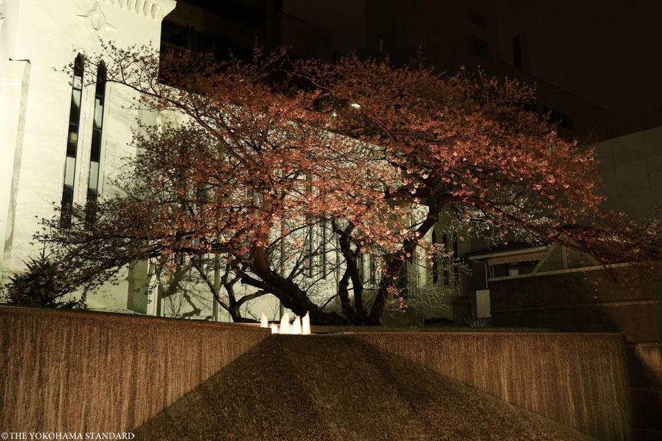横浜海岸教会の夜桜2-THE YOKOHAMA STANDARD