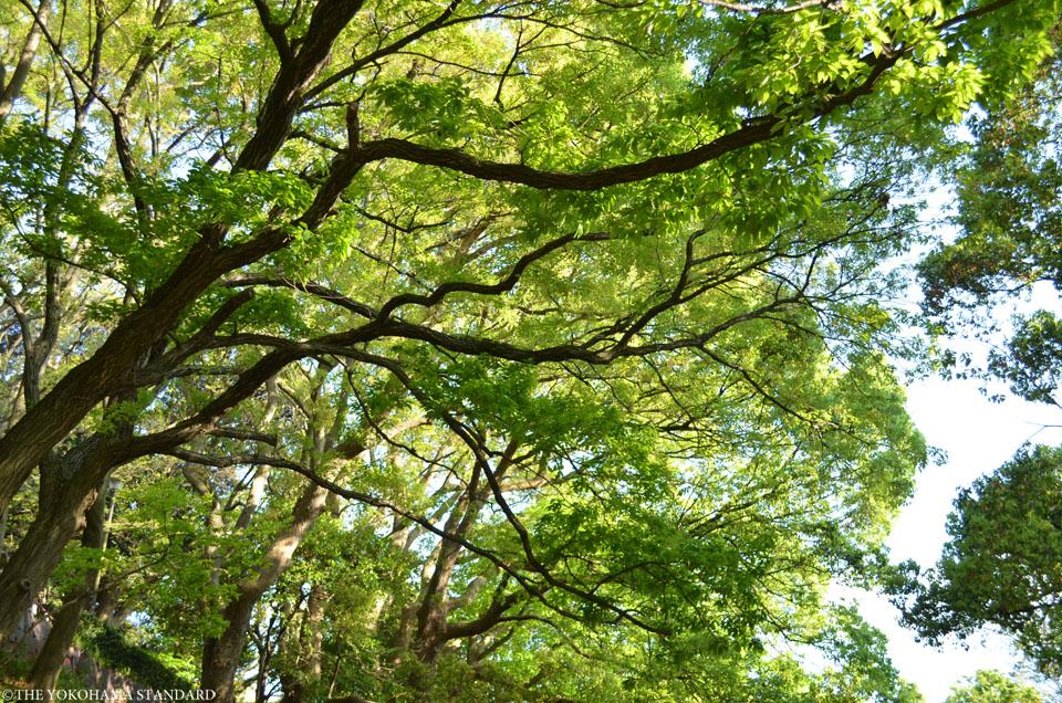 山手公園21-THE YOKOHAMA STANDARD