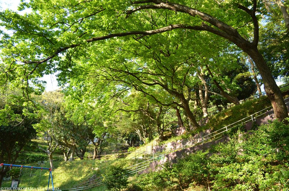 山手公園20-THE YOKOHAMA STANDARD