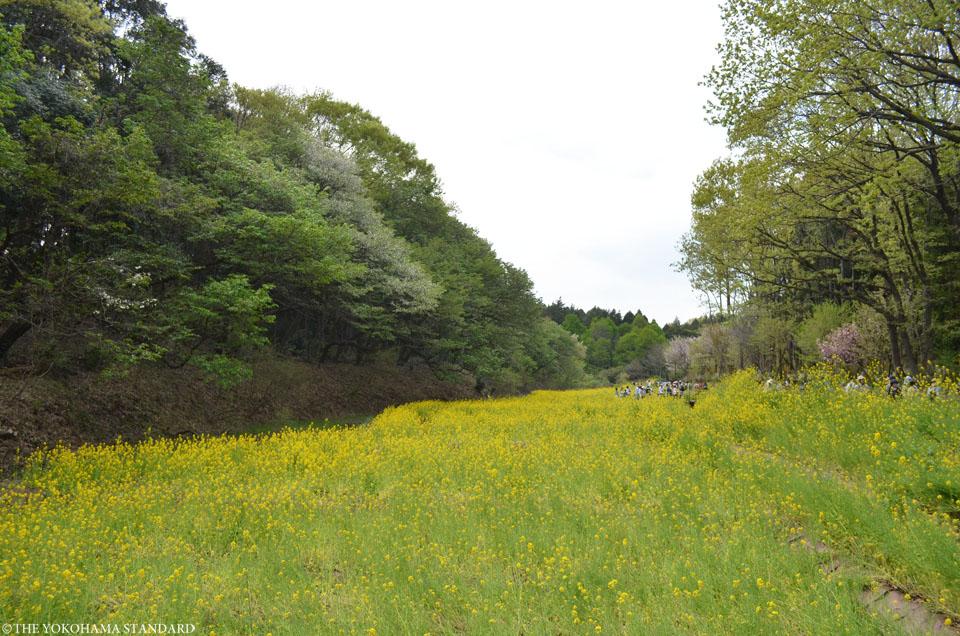 里山ガーデン3-THE YOKOHAMA STANDARD