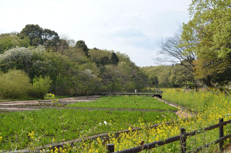 里山ガーデン1-THE YOKOHAMA STANDARD