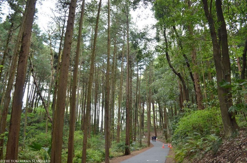 里山ガーデン4-THE YOKOHAMA STANDARD