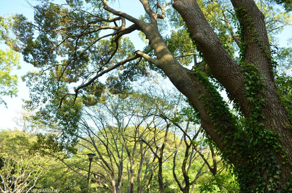 山手公園23-THE YOKOHAMA STANDARD