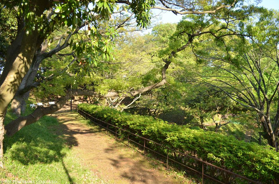 山手公園17-THE YOKOHAMA STANDARD