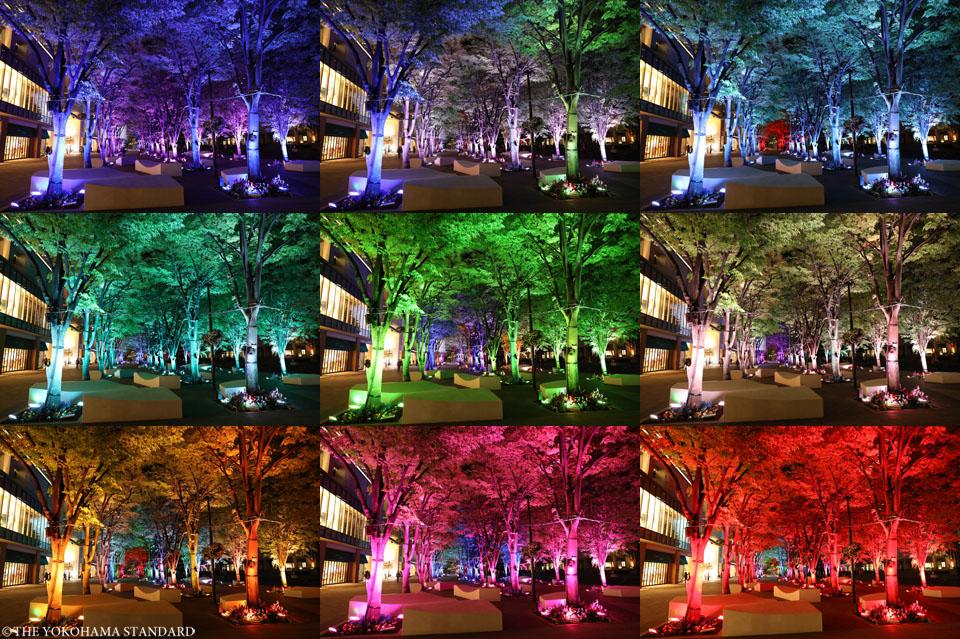 夜のグランモール公園・緑化フェア1-THE YOKOHAMA STANDARD